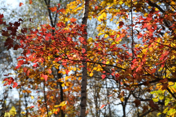 Осень под Хабаровском